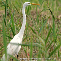 諫早湾の鳥と自然 写真展