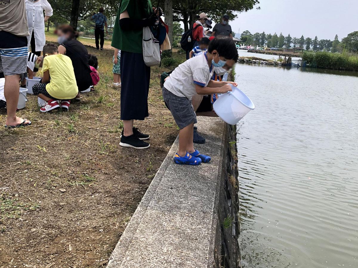 コイ・フナの稚魚放流体験