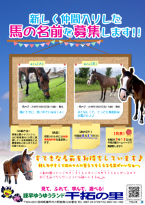 馬の名前募集
