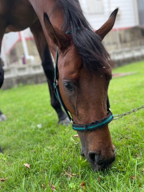 馬の名前決定!